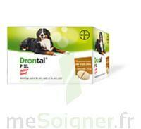 Drontal P XL Comprimés chien B/2 à DIJON